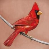 covers/183/old_crowsyoung_cardinals_alexisonfire.jpg
