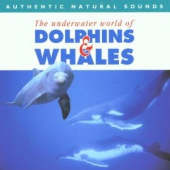 covers/690/dolphins_whales_1158797.jpg